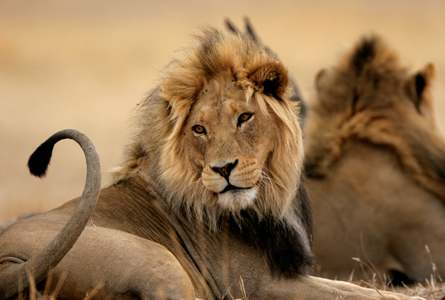 The Last Lions Erwin Niemand
