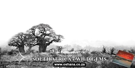 BaobabsFrontEnds